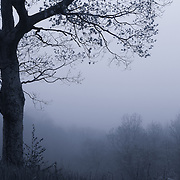 """""""Silent Poem"""" mono<br /> <br /> Beautiful lone tree in fog during spring in the Blue Ridge Mountains.<br /> <br /> All About Fog by Rachel Cohen"""