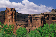 Cottonwood trees in Courthouse Wash, below Courthouse Towers, Arches National Park, UTAH