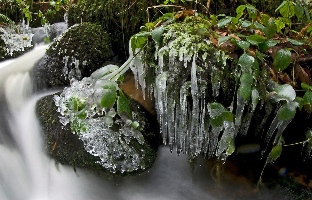 Icicles form around a fast flowing stream in the steep-sided Teign Valley, Dunsford Wood, near Exeter, South Devon, England.