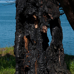 Burned Out Tree Trunk, Yellow Island, San Juan Islands, Washington, US
