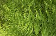 fern fronds with golden light