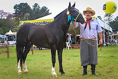 Grandes Campeões Cavalo Campeiro