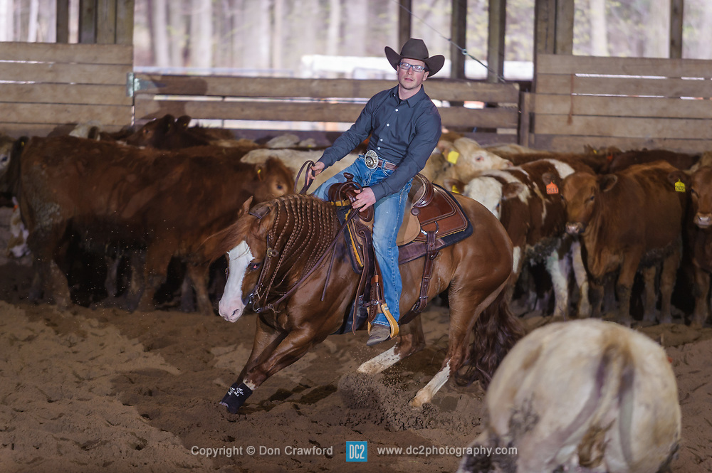 April 29 2017 - Minshall Farm Cutting 1, held at Minshall Farms, Hillsburgh Ontario. The event was put on by the Ontario Cutting Horse Association. Riding in the Ranch Class is Chet Martin on Lectric N Chic owned by the rider.