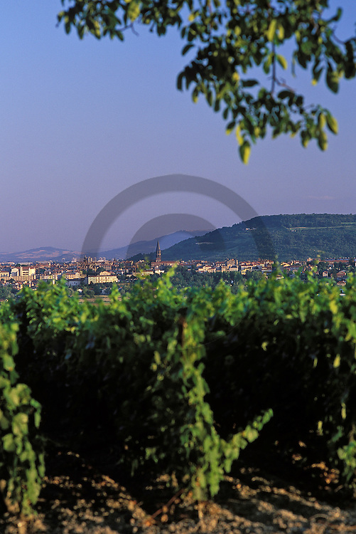 15/09/99 - SAINT BONNET PRES RIOM - PUY DE DOME - FRANCE - Vignoble de MADARGUE, Cotes d Auvergne - Photo Jerome CHABANNE