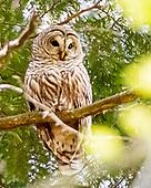 Owls - 2019
