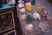 Seashells, Key West, Florida<br />