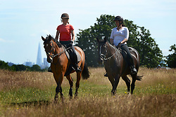 © Licensed to London News Pictures. 22/07/2012. Richmond, UK Horse riders take advantage of the sunshine. People enjoy the warm weather in Richmond Park  today, Sunday 22nd July 2012. Temperatures in London are expected to top 30 degrees celsius this coming week. Photo credit : Stephen Simpson/LNP