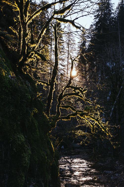Oneonta Gorge, Oregon, January 2016. ©Jason Quigley