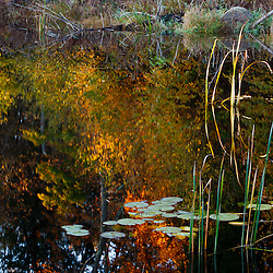 Lily pads and pond reflections at Elmwood Farm in Hopkinton, Massachusetts.