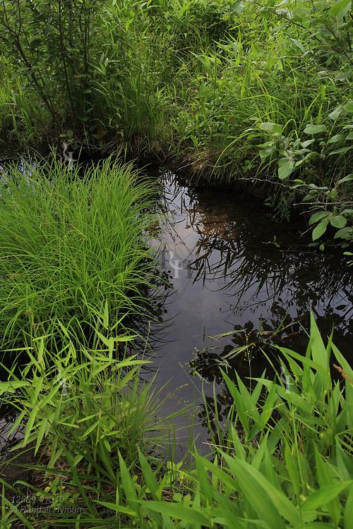 Grasses surround still, crystalline water a feature of Grasshopper Hollow, the largest, most significant fen complex in unglaciated North America; Reynolds, Missouri.