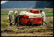 Woman in scarf pushes rice into combine as farmer makes a repair; October harvest near Utsunomiya. Japan