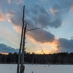 Standing dead trees silhouetted against the late afternoon clouds above a frozen beaver pond in Epping, New Hampshire.