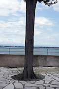 tree build in pavement on a waterfront promenade