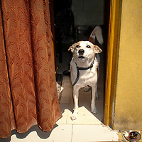 Dog, India by Kushboo Solanki. <br />