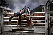 A cowboy prepares his horse prior to the Bareback Bronco during the 98th Falkland Stampede in Falkland, BC. (2016)