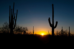 Silhouette of a pair of giant Saguaro cacti (Carnegiea gigantea) at sunset, Saguaro National Park, Tucson, Arizona, United States of America