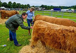 Biggar, South Lanarkshire, Scotland 23 July 2016<br /> <br /> Preparing highland cattle for showing.<br /> <br /> (c) Andrew Wilson | Edinburgh Elite media