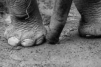 Hope Elephants in Hope, Maine