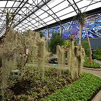 Toluca, México.- (Julio 03, 2018).- El próximo 5 de julio el Jardín Botánico Cosmovitral cumplirá 38 años, alojado en un edificio construido en el Porfiriato y que en un inicio albergo  al Mercado 16 de Septiembre, consta de 48 vitrales diseñados por Leopoldo Flores,  cuenta con más de 400 especies de plantas que después de la remodelación  tienen áreas como el jardín húmedo, jardín oriental, jardín desértico, plantas aromáticas y arboles frutales y el jardín tropical, abierto para todo el público es un lugar de gran interés turístico. Agencia MVT / Crisanta Espinosa.
