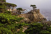 Lone Cypress, Pebble Beach, California