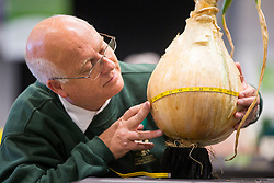 © Licensed to London News Pictures. 15/09/2017. Harrogate UK. Photo credit: Judge Adrian Read measures a giant onion this morning at the Giant Vegetable competition at this years Harrogate Autumn Flower Show in Yorkshire. Andrew McCaren/LNP