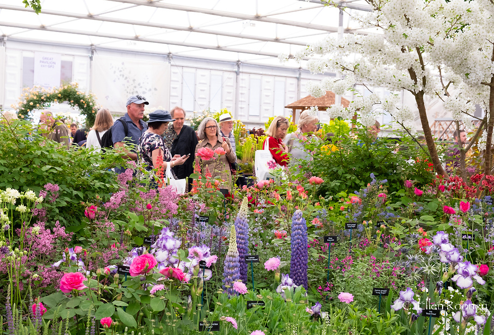 Visitors at the RHS Chelsea Flower Show 2019 around the Hillier Nurseries display in the Great Pavilion. London, UK
