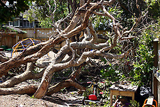 Auckland-Play centre children injured by falling tree, Gillies Avenue