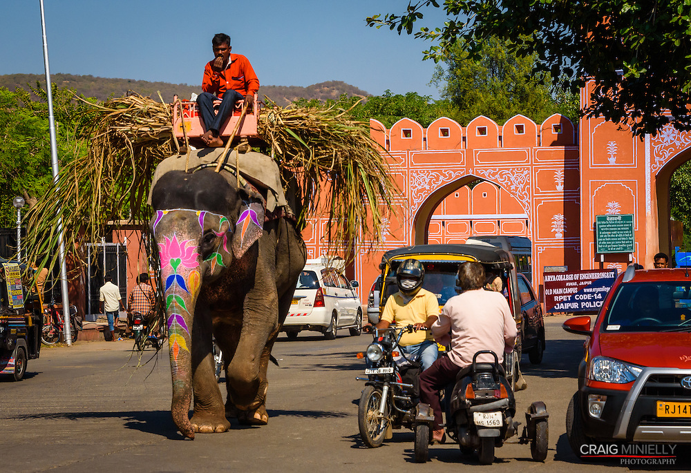 Elephant at work in the streets of Jaipur, India.<br /> <br />  Nikon D750 100mm  ISO 1000  f9  1/3200s