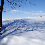 Trees and shadows cross a snow covered hayfield with Round hay bales in the distance.