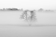 A lone tree on a very cold and misty winter day on the plains of Västergötland outside Mariestad.