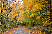 Empty road and The Fall foliage colours of Aspen trees near Woodstock in Vermont, New England, USA