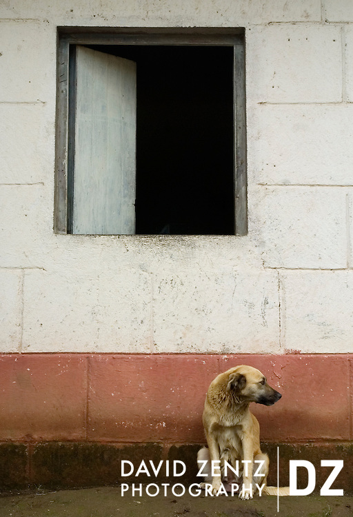A dog sits beneath a window in Jinotepe, Nicaragua on October 3, 2004.