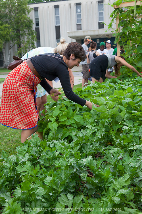 Field to Table Schools Educator Workshop participants at FoodShare's large market garden at Bendale school on day 1.