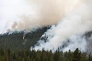 https://Duncan.co/forest-fire