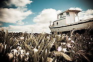 Boat aground on flowers