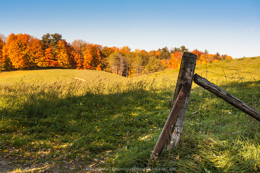 Old fence post in front of a hillside bright with autum foliage.