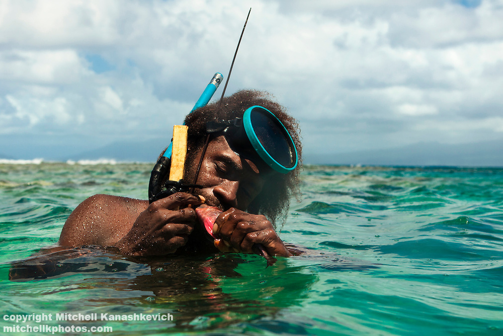 Fish makes up a vast part of the diet of the people of Vanuatu's coastal areas. Freediving and spearfishing are an important way of making a livelyhood for men living in these areas. Here a man bites the fish's head in order to kill it. Rah Lava Island, Torba Province, Vanuatu
