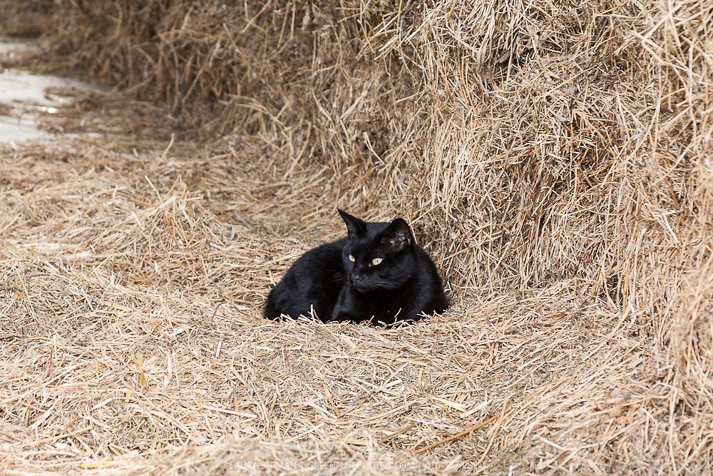 Farm Cat Food