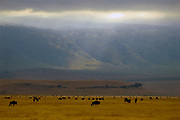 Herds of grazing animals at the bottom of the fantastic Ngorongoro Crater.