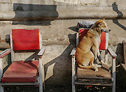 A dog rests on a chair in a Mandaly, Myanmar street.