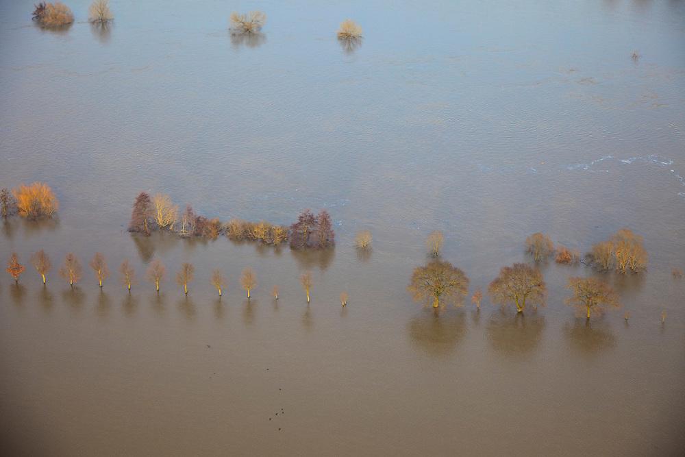 Nederland, Limburg, Noord-Limburg, 10-01-2011;.de Maas met hoogwater  ter hoogte van Vierlingsbeek. De rivier de Maas is buiten de oevers getreden de uiterwaarden zijn ondergelopen. Toppenvan de boemn stken boven het water uit..luchtfoto (toeslag), aerial photo (additional fee required).foto/photo Siebe Swart