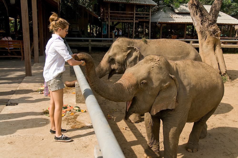 "A visitor feeds the elephants at the Elephant Nature Park near Chiang Mai, Thailand.  Sangduen ""Lek"" Chailert founded the park as a sanctuary and rescue centre for elephants.  The park currently has 32 elephants sponsored and supported by volunteers from all over the world."