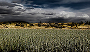 Digitally manipulated image of an onion field with dramatic sky