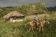 Vinales, Cuba, tobacco farming in the Vinales Valley