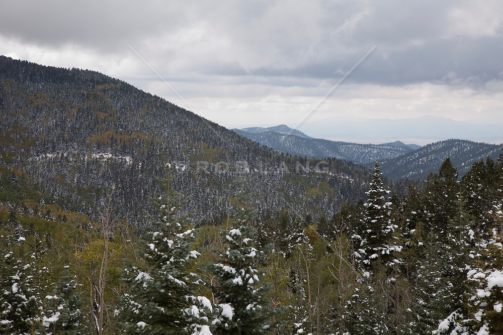 fresh snowfall on the Santa Fe Mountain during the changing of the  Aspen Trees leaves in Autumn