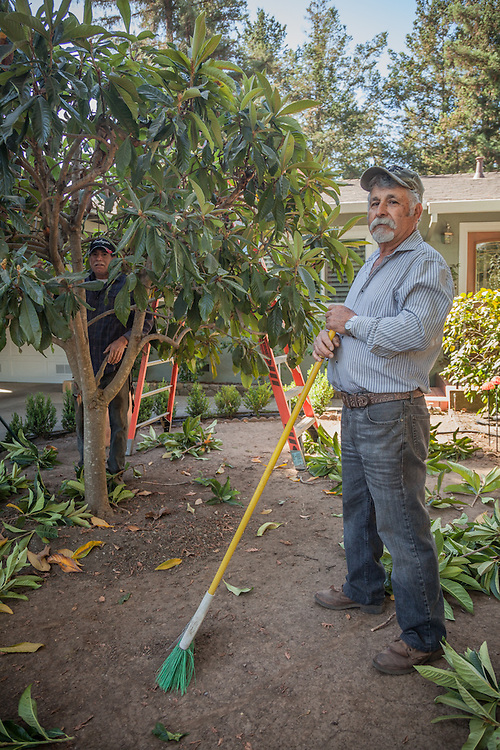 Luis Robledo clears vegetation in front of his home on Cedar Street in Calistoga.