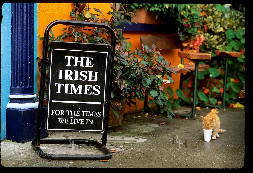 Cat drinks milk from cup beside Irish Times newspaper sign outside grocery store in town of Eyeries; Beara Peninsula, Ireland.