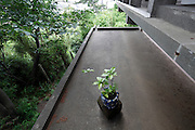 young green plant in a pot on a concrete balcony