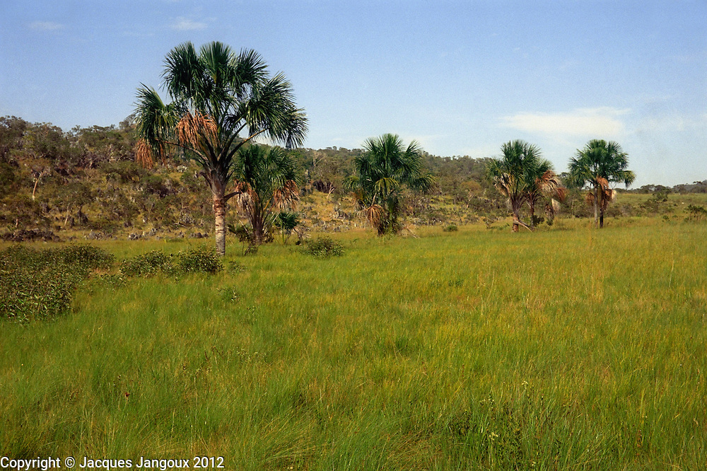 Two different ecosystems in savanna (cerrado) biome: vereda, a treeless grassland on seasonally waterlogged soil, with buriti palm (Mauritia flexuosa) along small stream; and campos rupestres, saxicolous vegetation on hilly rock outcrop. Brazilian Highlands, Goiás State, Brazil