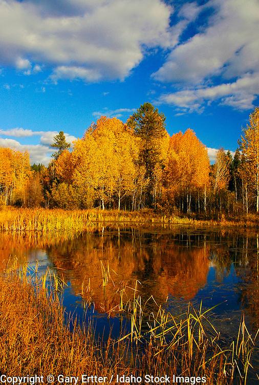 McCall, Idaho.  Fall Colors at Spring Mountain Ranch